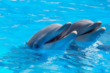 眩光,海豚,水