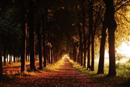 路径,晚上,秋天,树木,巷子里