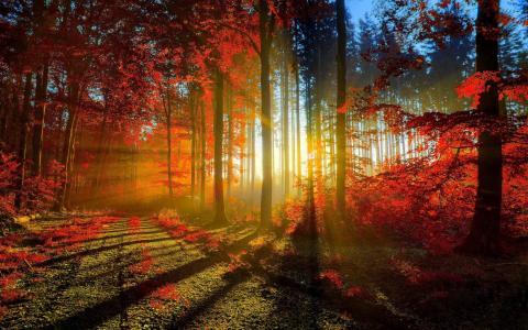 太阳,道恩,道路,树,叶,光,秋,雷,日落,森林