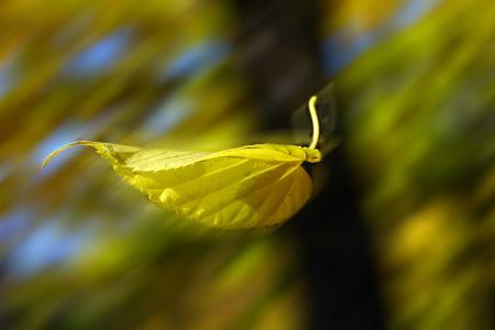 秋天,叶子,漂浮