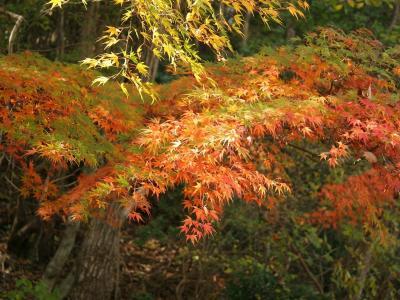 森林,新鲜空气,叶子,红色绿色