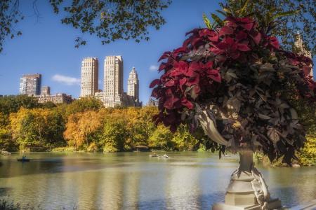 彼得达西,美国,城市,纽约,公园,建筑物,房屋,湖泊,自然,植物