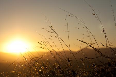 太阳,植物,草,黎明,黎明,早上,在光线中