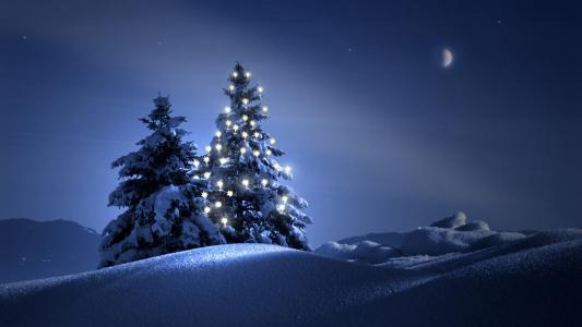冬天,圣诞树