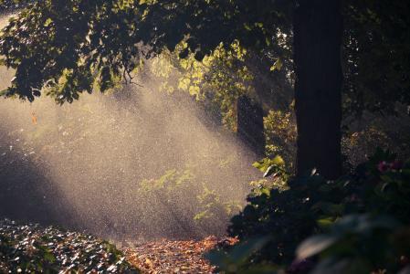 滴,自然,树,秋天,叶子,雨,光