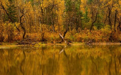 河,水,树,性质,森林,秋天