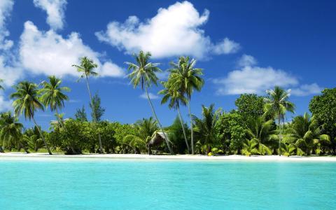 热带,自然,海洋,棕榈树,海滩,度假村,天空,云