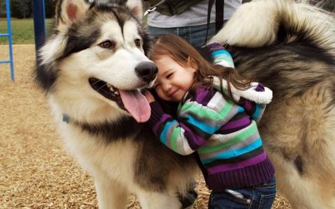 小狗,女孩