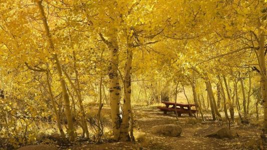 性质,假期,秋季,美丽,树,石头,黄色背景