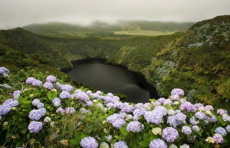 自然,景观,小山,花,绣球花,湖,雾,云