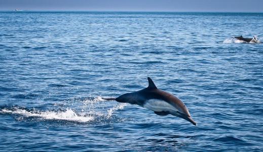 海豚,海,泡沫