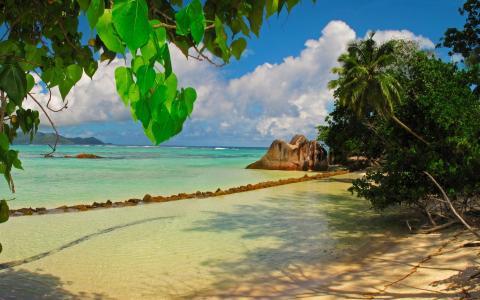 自然,热带,塞舌尔,石头,棕榈树,海洋,山,天堂,美丽