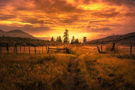 自然,夏天,领域,路,小山,篱芭,日落