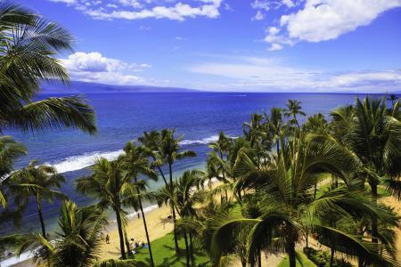 海,海岸,天空,热带地区,海洋,希洛,夏威夷,棕榈树,性质