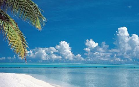 海,蓝色,波浪,云,棕榈树的树枝
