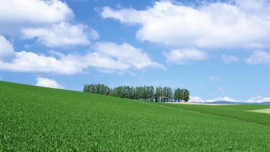 明亮的绿草,人字形,小丘