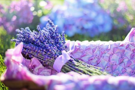 篮子,花束,薰衣草,散景