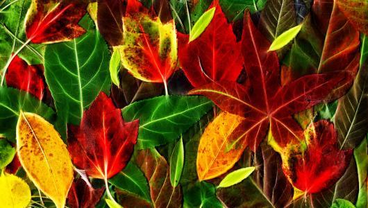 叶子,秋天