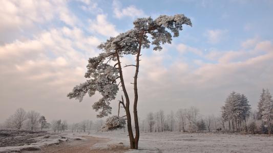 雪,树,冷,壁纸,风景,冬季,性质,壁纸