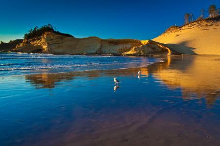 天空,海,岸,鸟,海鸥,岩石