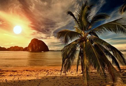 热带,海滩,棕榈,海