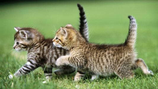 小猫,走路