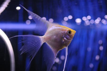 鱼,水族馆,眩光