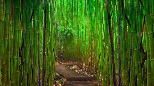 竹,丛林,绿色,树,方式