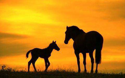 马,家庭,照片,晚上,日落,黑暗的背景