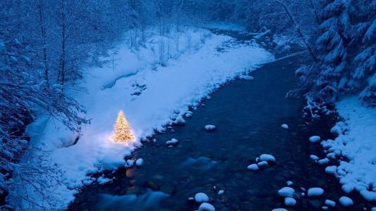 自然,冬季,树,山区河流,森林
