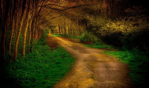 路,树,秋天,公园,光