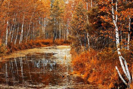 性质,秋季,森林,树木,叶子,河,反射