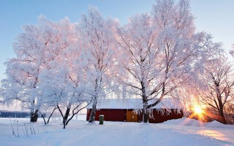 冬天,性质,树木,白霜