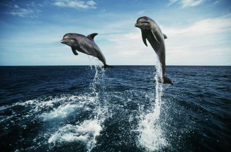 海豚,海,美丽,照片,积极