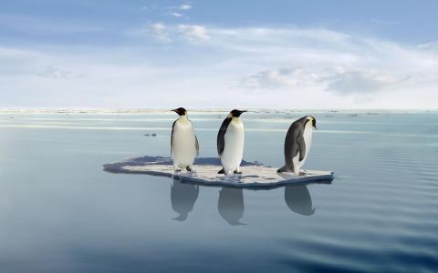 企鹅,三,三,动物