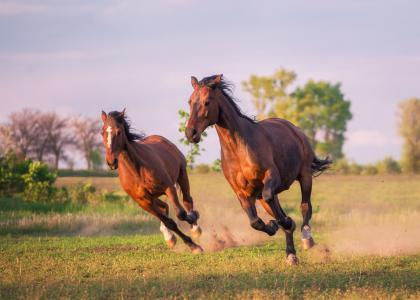 马,跑步,动物