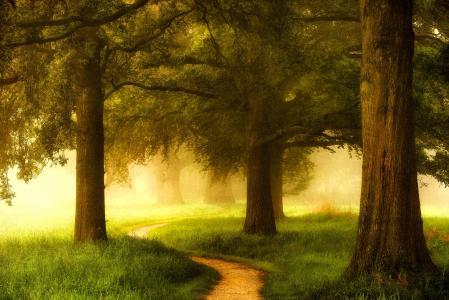性质,树,雾,光,路径,荷兰