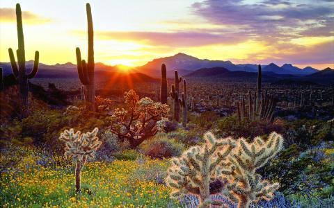 仙人掌,太阳,鲜花,天空,光线,山