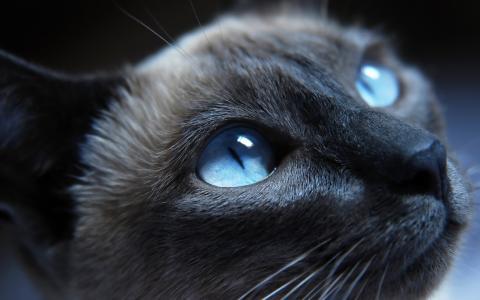 猫,猫咪,猫,kotyara