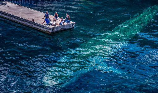 泊位,海,水,巨人