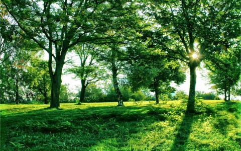 清新护眼的正午树林风光