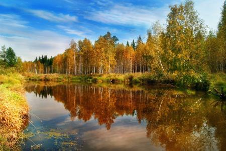 森林,性质,秋季,水,思考