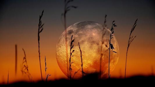 宏观照片,非洲,月亮,美丽