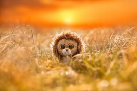 玩具,狮子,狮子,眼睛,反射,斑马,非洲