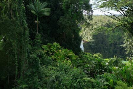 丛林,绿化,自然