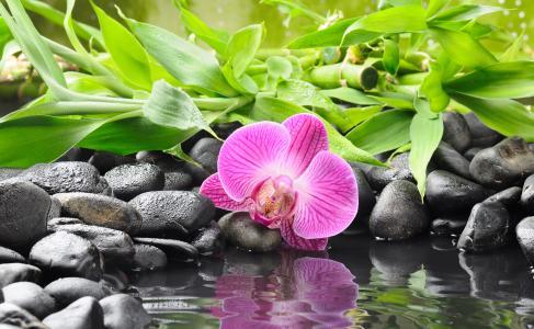 花,石头,水,反射,叶子,性质,竹子