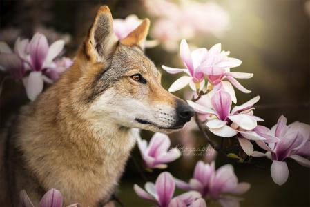 狗,狗,脸,配置文件,分支机构,鲜花,玉兰