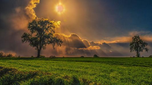 树,场,光线,云,太阳