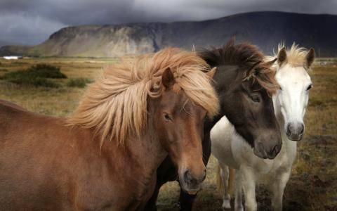 马,鬃毛,草原,不同