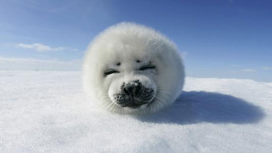 冰,雪,冬天,北极,白色